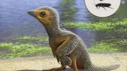 127 Million Years Old Baby Bird Fossil Sheds Light on Avian Evolution