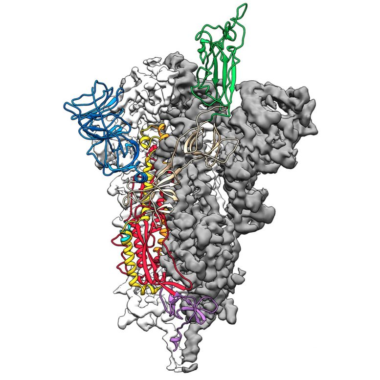 2019 nCoV Spike Protein Structure