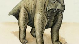 260 Million Year Old Pre-Reptile May Be Earliest Known to Walk Upright on All Fours