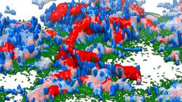 3-D reconstruction of the bacterial biofilm