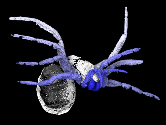 305 Million-Year-Old Early Spider Fossil