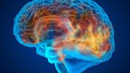 3D Brain Scan Illustration