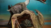 3D Embryos Provide Insight into the Life History of a Pterosaur