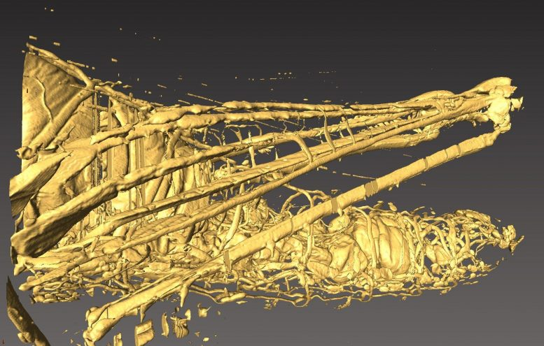3D Microtomographic Grasshopper Image