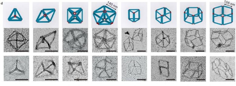 3D Polyhedra Self-Linked M-DNA