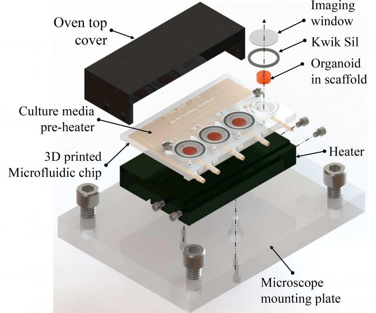 3D-Printed Microfluidic Bioreactor for Organ-on-Chip Cell Culture