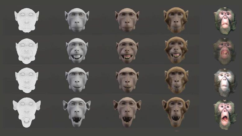 5 Monkey Faces