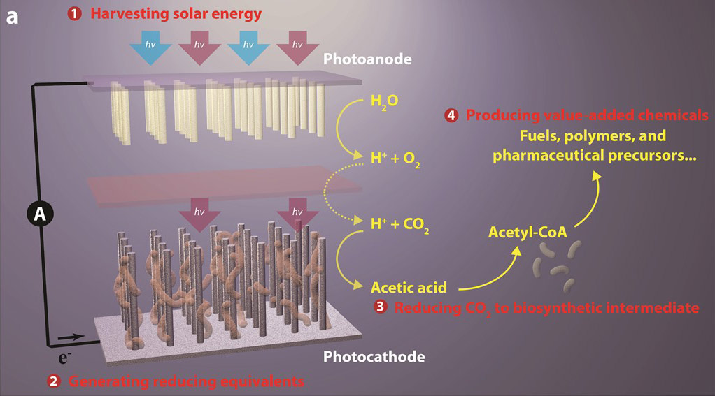 Artificial Photosynthesis System Poses Win Win For The
