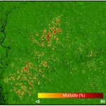A Mortality Map of the Amazon Near Manaus