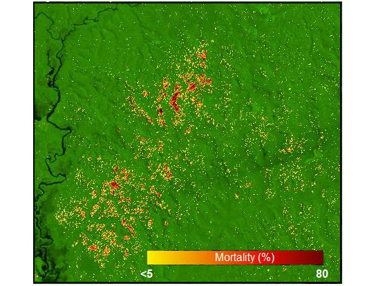 A-mortality-map-of-the-Amazon-near-Manaus
