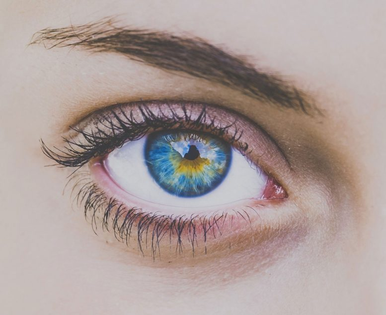 AI System Identifies Personality Traits from Eye Movements