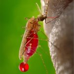 AIDS Drug Offers Protection Against Malaria