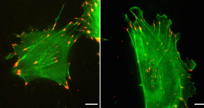 Actin Function Governed by Nucleotide Sequence