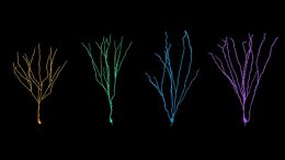 Adult-Born Neuron Reconstructions