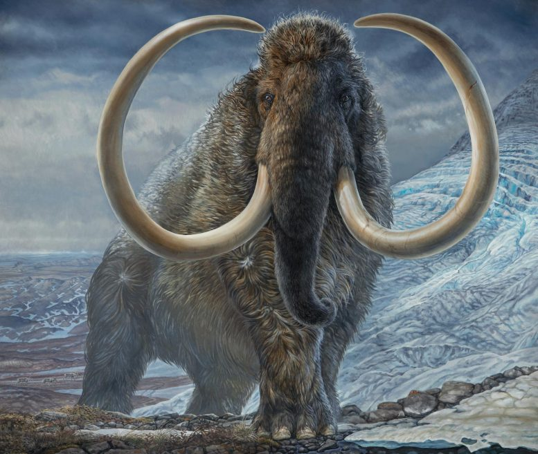 Adult Male Woolly Mammoth Illustration