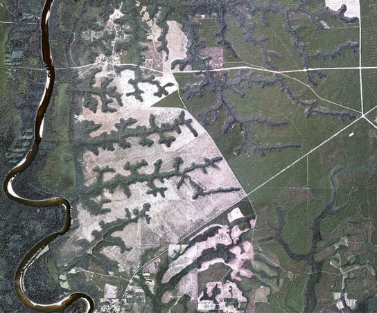 Aerial image of valley networks eroded by groundwater sapping into a sand plateau east of the Apalachicola River
