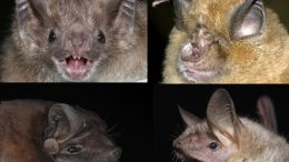 Age-Related Changes to the DNA of Bats