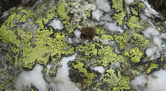 Algae, mosses, and lichens take up approximately 14 billion tons of carbon dioxide