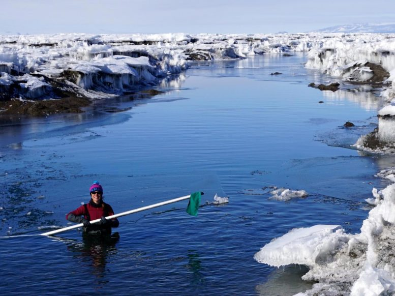 Alison Banwell Wades in Antarctic Meltwater