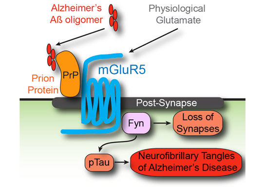 Alzheimers Missing Link Found