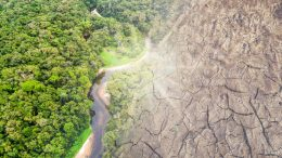 Amazon Rainforest Disappearing