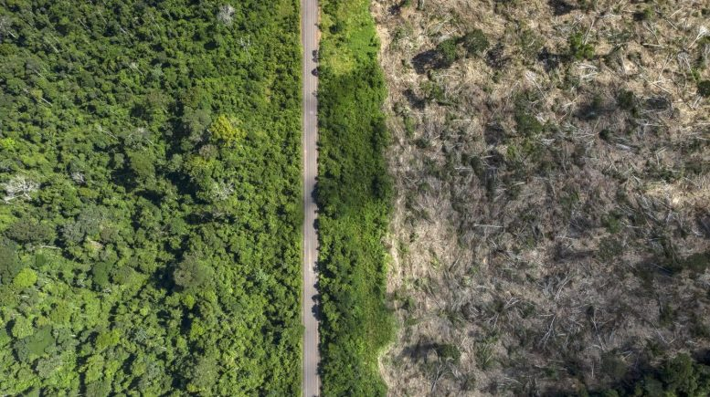 Amazon Recently Deforested Land
