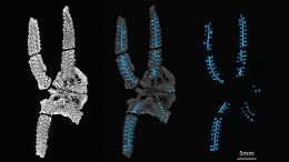 Ancient Brittle Star Reveals New Story About How Its Arms Functioned