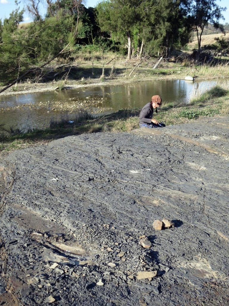 Anne-Laure Decombeix Excavating the Barraba Fossil Site