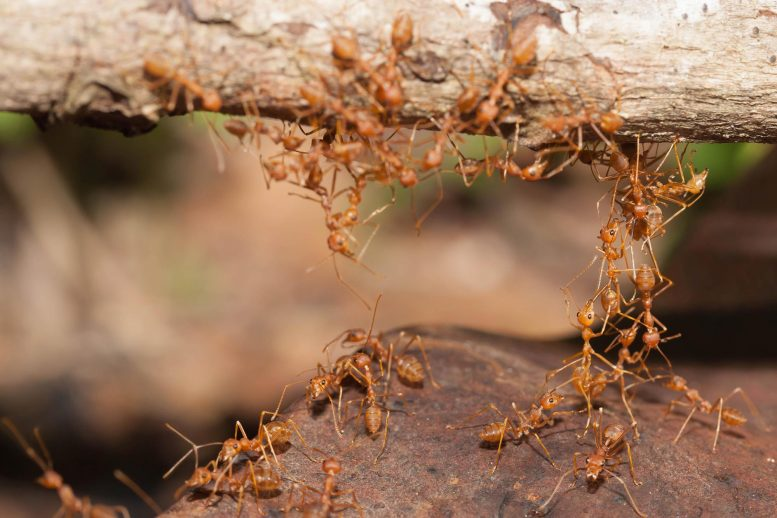 Ant Collective