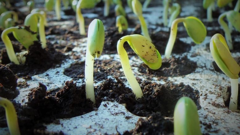 Antabactin Helps Seedlings Sprout