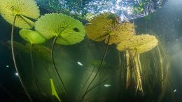 Aquatic Life in the Mangrove Forest