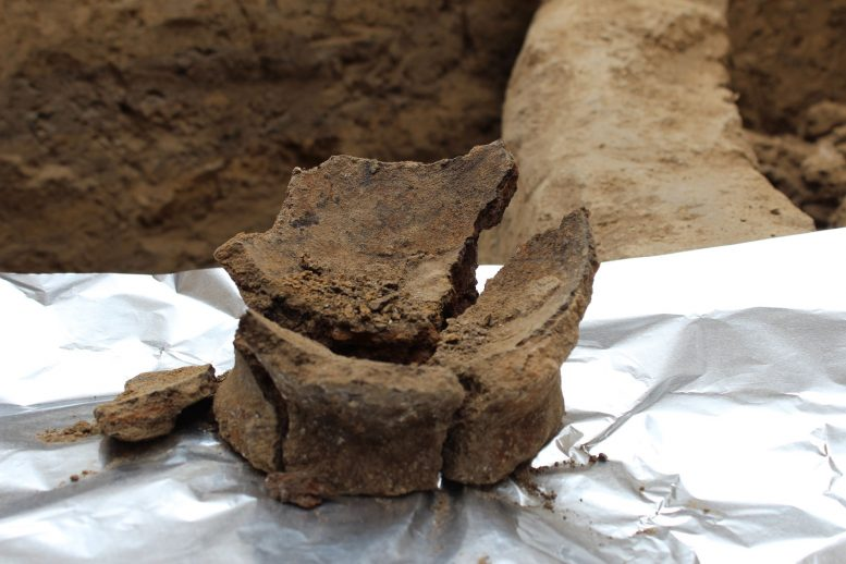 Archaeologists Find Earliest Evidence to Date of Winemaking