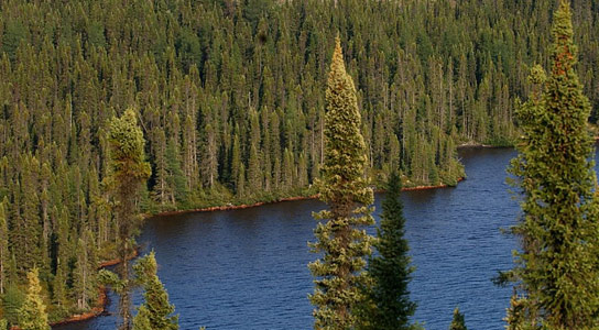 As Climate Changes Boreal Forests to Shift North