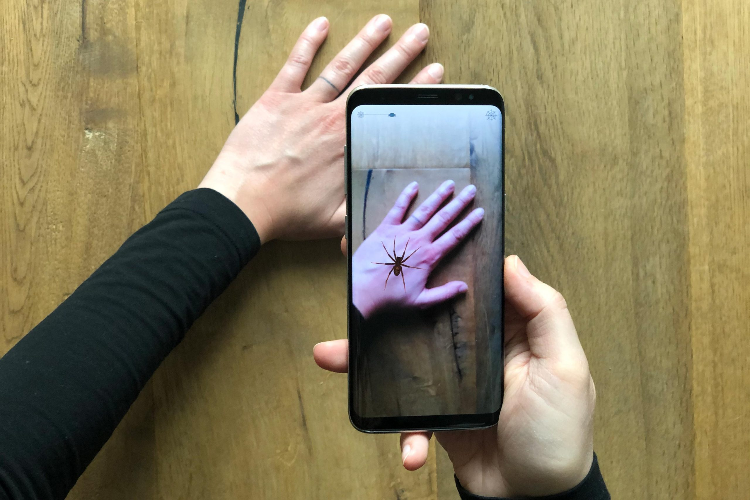 Smartphone App Helps Tackle Fear of Spiders Using Augmented Reality - SciTechDaily