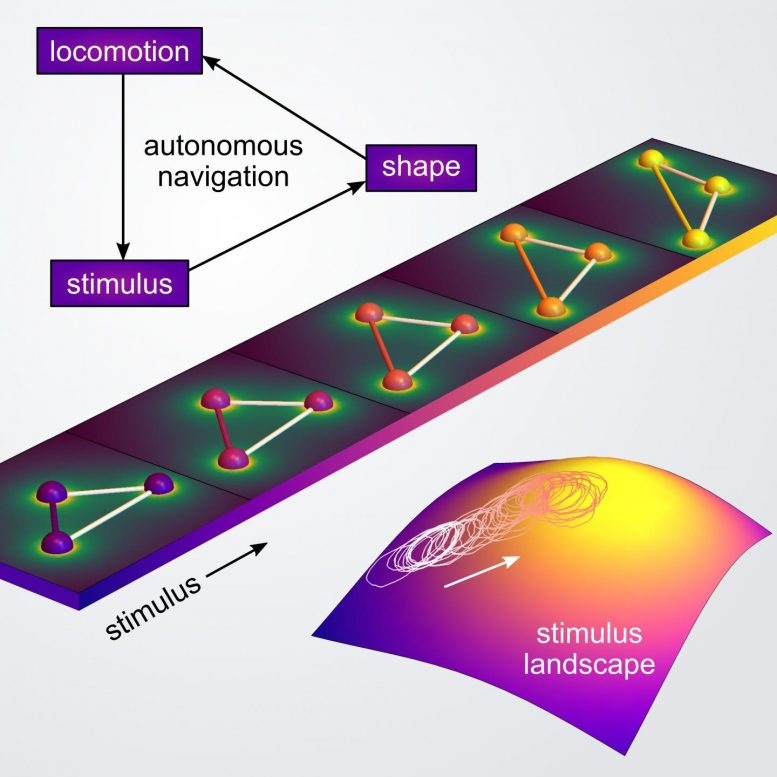Autonomous Navigation Via Shapeshifting