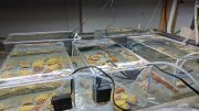 BIOS Yvonne Sawall Coral Experiment