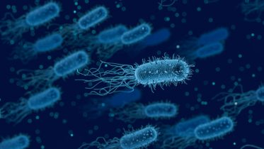 E. coli's Secret Weapon in Launching Infections Revealed