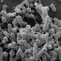 Bacteria Connect to Each Other Via Nanotubes
