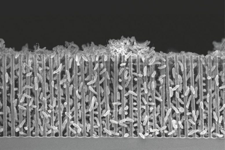 Bacteria in a Forest of Nanowires