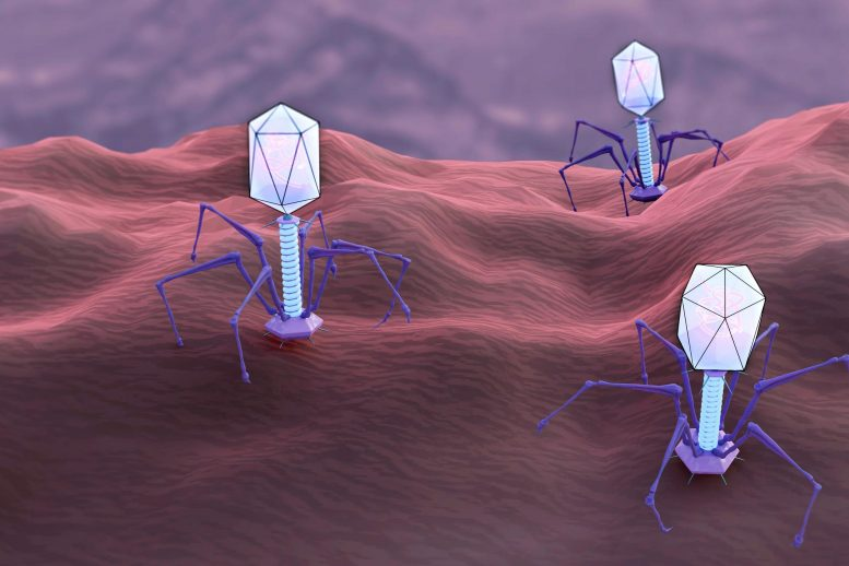 Bacterial Predator Concept