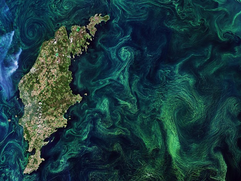 Baltic Algae Blooms