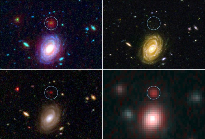 'Big Baby' Galaxies