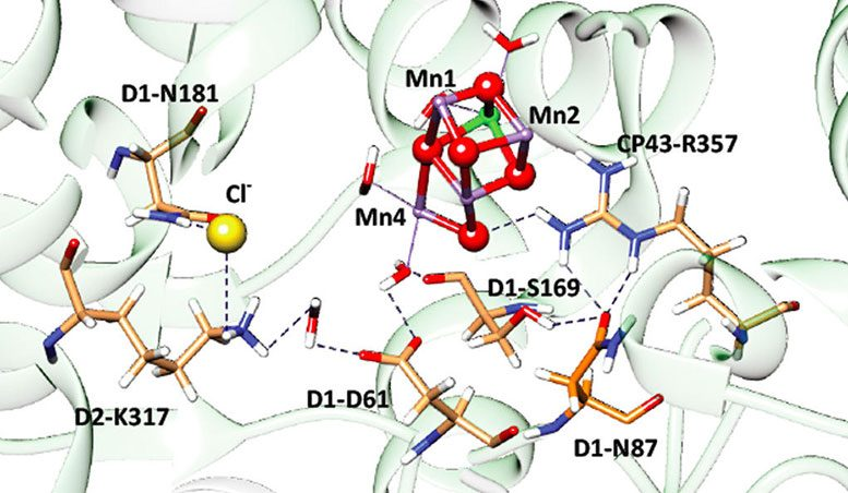 Biochemists Identify Key Similarities in Two Types of Natural Photosynthesis