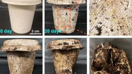 Biodegradable Cup Decomposition