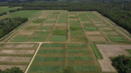 Biofuels Cropping System Research
