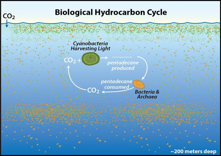 Biological Hydrocarbon Cycle