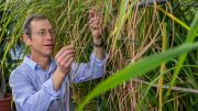 Biologist Kenneth Olsen Tending Rice