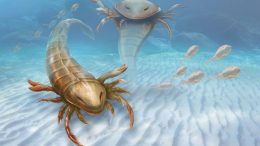 Biologists Discover Giant Sea Scorpion Pentecopterus