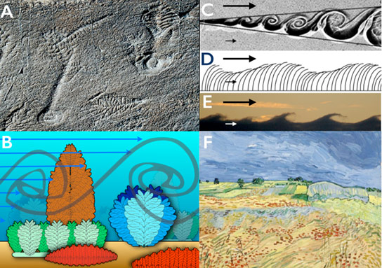 Biologists Reveal Why Early Life Began to Get Larger in Earths Oceans