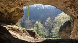 Biologists Sequence A New Neandertal Genome